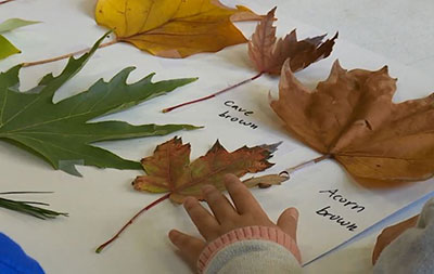A child arranging leaves on a page