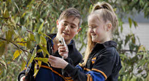 Two students using a digital camera to photograph leaves on a gumtree