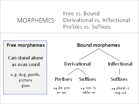 difference between free and bound morphemes