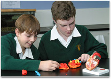 2 boys using a heart model as a guide in making their own plasticine model.