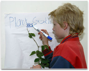 A student is measuring and marking plant height on a poster.