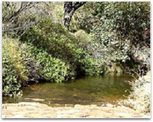 Photographic image of a small pond surrounded by native Australian bush.
